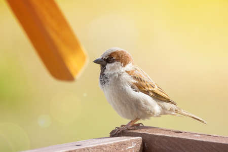 The photograph depicts a young sparrow on branch
