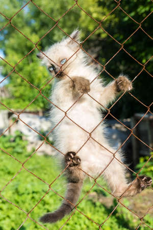 A kitten climbs on a fence from a grid, summer, Russia, 2017 Stock Photo