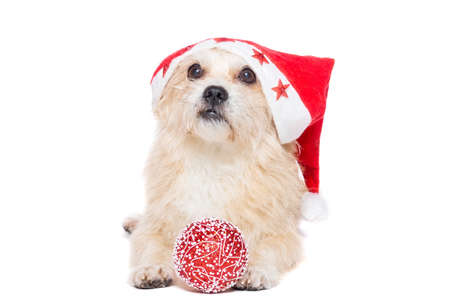 dog with a Christmas tree toy on a white background