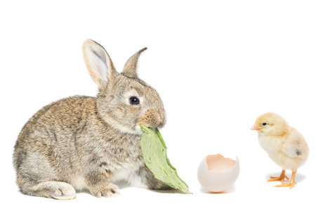 Easter Bunny and chicken on white background Stock Photo