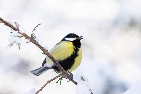 tit sentado en una rama en el parque de invierno nieve Foto de archivo