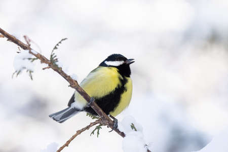 tit sitting on a branch in winter Park snow Foto de archivo