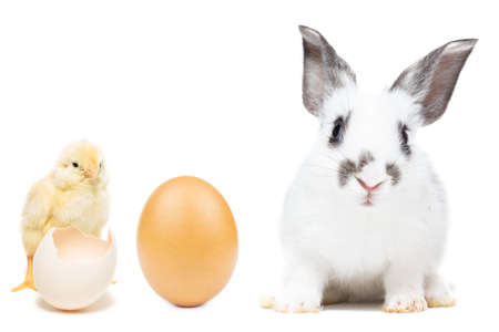 chicken and rabbit on white background, Easter egg and Chicks and rabbit on white background, isolated Stock Photo
