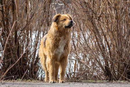 mongrel dog walks in the Park in the spring Imagens