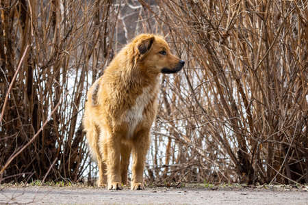 mongrel dog walks in the Park in the spring