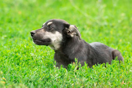 A sad black puppy sits in the green grass. A little puppy with white spots looks to the side. Copy space Banco de Imagens