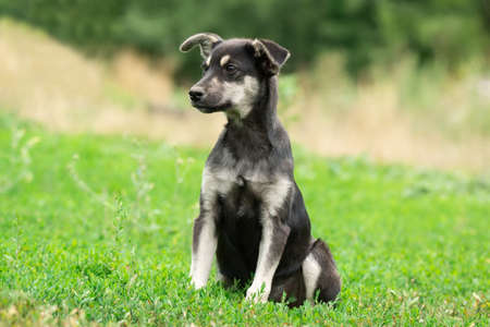A sad black puppy sits in the green grass. A little puppy with white spots looks to the side. Copy space