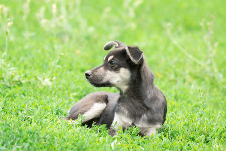 A sad black puppy sits in the green grass. A little puppy with white spots looks to the side. Copy space Imagens