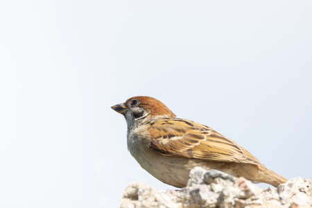 Sparrow. Sparrow who sits on bush with autumnal leaves.