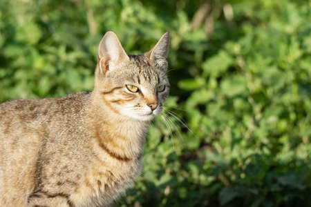 Cat in the garden. Portrait of gray cat. Domestic cat in flowers