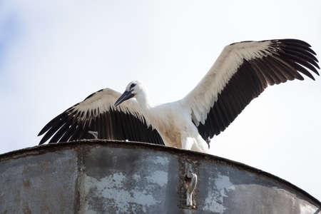 Stork in the nest waiting for a partner
