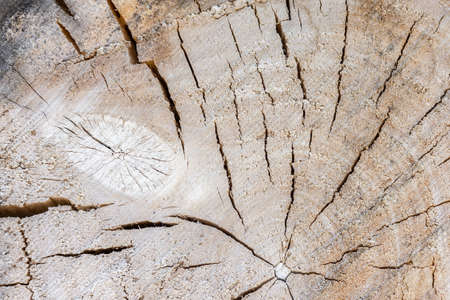 Abstract tree background, tree texture in section