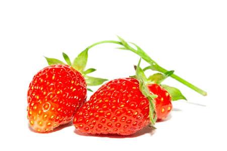 Ripe fresh strawberry clipping path. Strawberry fresh organic fruit.