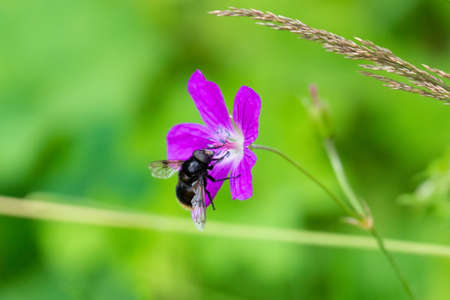 Fly on a pink flower on a background of green grass