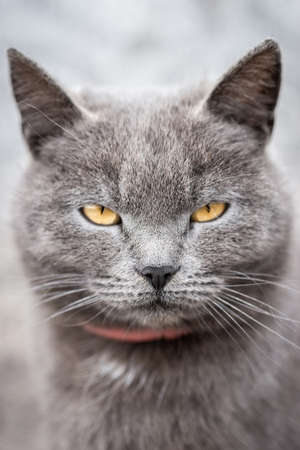 Little cute fluffy gray kitten in green grass on a summer day. Portrait of a kitten in nature.