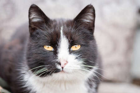 A black and white cat on the green grass background Stock Photo