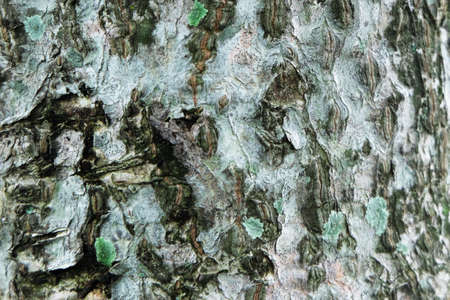 tree skin texture and pattern