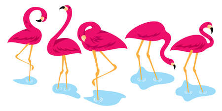 Pink flamingo set  vector illustration. Exotic flamingo bird in different poses isolated on a white background