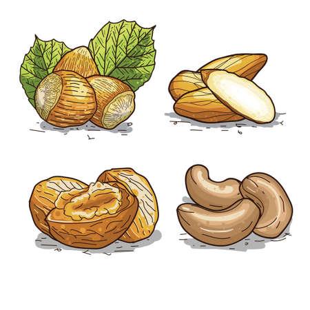 Set of handdrawn illustration of nuts  wallnut  hazelnut  cashew  and almond. Illustration
