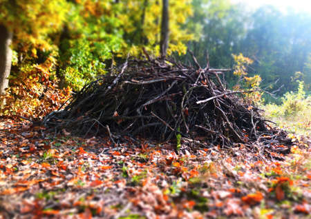 brushwood: Pile brushwood in the forest in autumn.