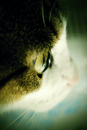 feline: A Defocused detail photo of feline face. Stock Photo