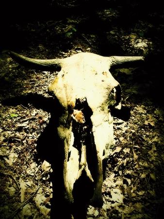 animal skeleton: Animal skull in forest. Animal skeleton. Bones Stock Photo