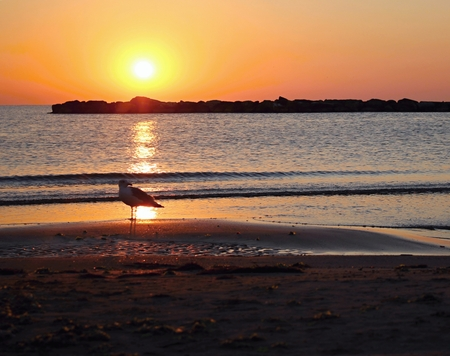Horison on the sea. Sea in evening. Seagull in sunset. Stock Photo