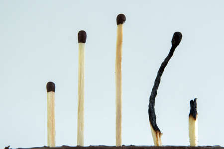 several whole wooden matches stand opposite already burned Stock Photo