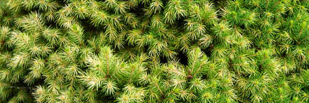 natural green background: thick soft needles
