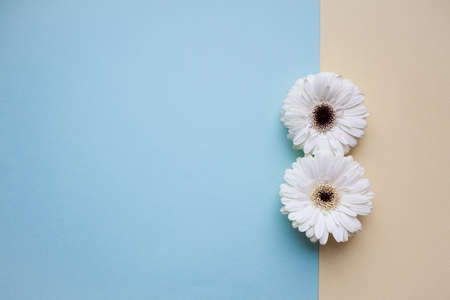 The international womens day on march background with flowers petal number.