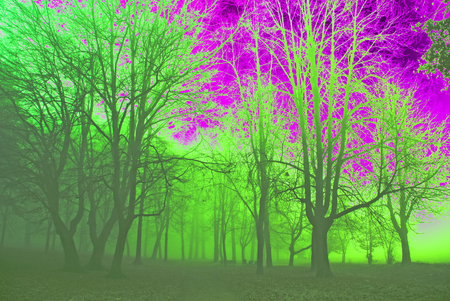hallucination: Hallucination, magic forest