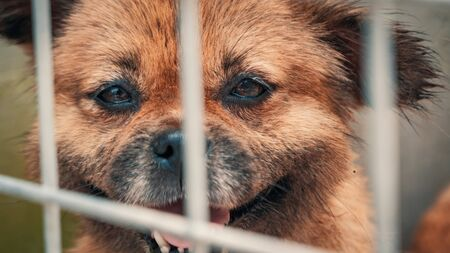 Portrait of sad dog in shelter behind fence waiting to be rescued and adopted to new home. Banque d'images - 135987402