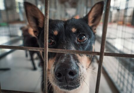 Portrait of sad dog in shelter behind fence waiting to be rescued and adopted to new home. Banque d'images - 135987397