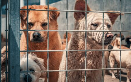 Unwanted and homeless dogs in animal shelter. Banque d'images - 136608020