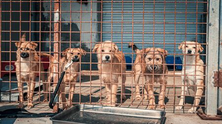 Unwanted and homeless dogs in animal shelter. Banque d'images - 136608001