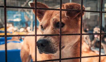 Portrait of sad dog in shelter behind fence waiting to be rescued and adopted to new home. Banque d'images - 136608000