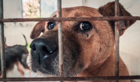 Portrait of sad dog in shelter behind fence waiting to be rescued and adopted to new home. Banque d'images - 135987984