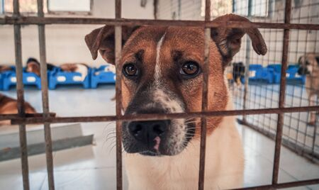 Portrait of sad dog in shelter behind fence waiting to be rescued and adopted to new home. Banque d'images - 135987992