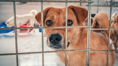 Portrait of sad dog in shelter behind fence waiting to be rescued and adopted to new home.