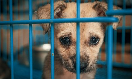 Portrait of sad puppy in shelter behind fence waiting to be rescued and adopted to new home. Shelter for animals concept Banque d'images - 135987991