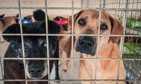 Unwanted and homeless dogs in animal shelter. Banque d'images - 136607999