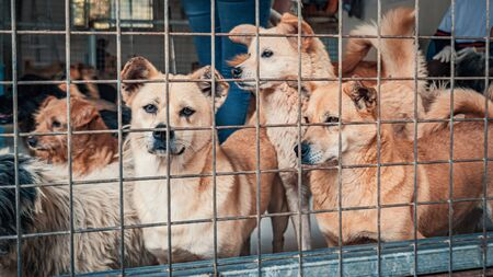 Unwanted and homeless dogs in animal shelter. Banque d'images - 136607998
