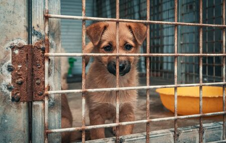 Portrait of sad puppy in shelter behind fence waiting to be rescued and adopted to new home. Banque d'images - 136608013