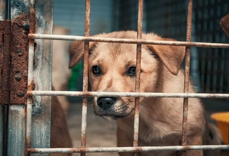 Portrait of sad puppy in shelter behind fence waiting to be rescued and adopted to new home.