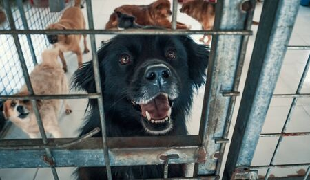 Portrait of dog in shelter behind fence waiting to be rescued and adopted to new home.