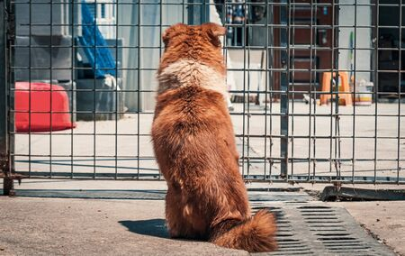 Sad dog in shelter behind fence waiting to be rescued and adopted to new home.