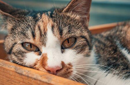 Portrait shot of homeless stray cat living in the animal shelter.