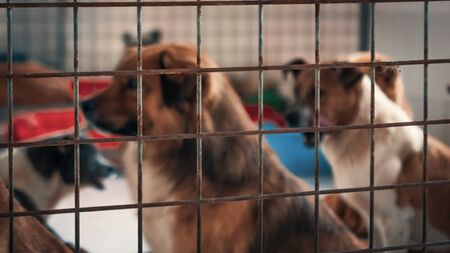 Blurred image of unwanted and homeless dogs in animal shelter.