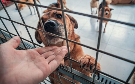 Male hand petting caged stray dog in pet shelter.