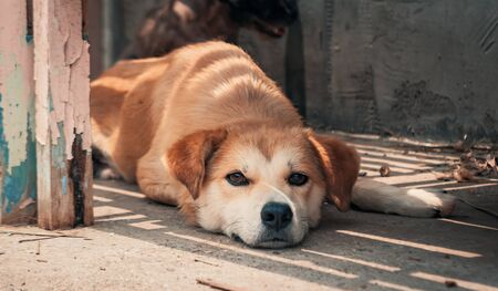 Sad dog in shelter waiting to be rescued and adopted to new home.